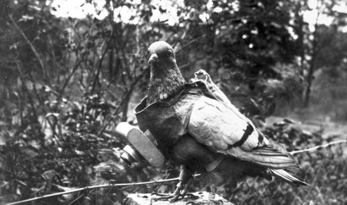 Les pigeons de la Grande Guerre